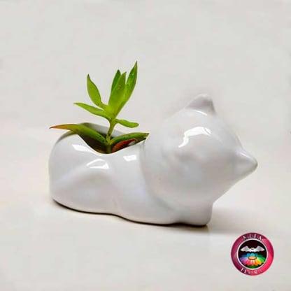 Suculenta matera cerámica animales gato acostado diagonal Neea Flora