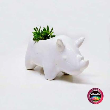 Suculenta matera cerámica animales rinoceronte