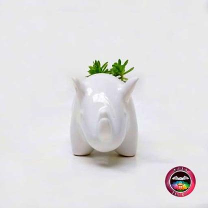Suculenta maceta cerámica animales rinoceronte frontal Neea Flora