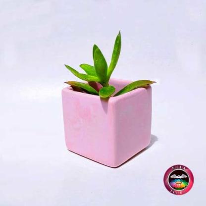 Suculenta matera cerámica cubo rosa mediana diagonal Neea Flora