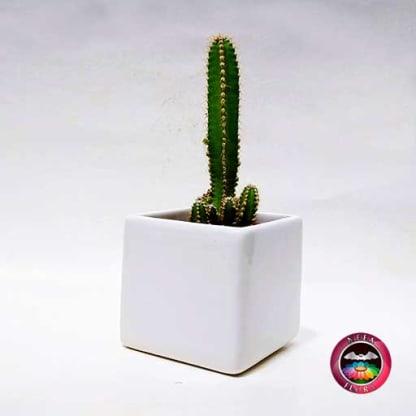 Cactus matera cerámica mediana diagonal Neea Flora