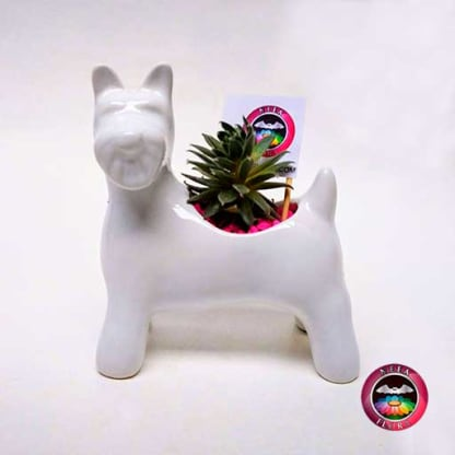 Suculenta matera cerámica animales perro Snowzer