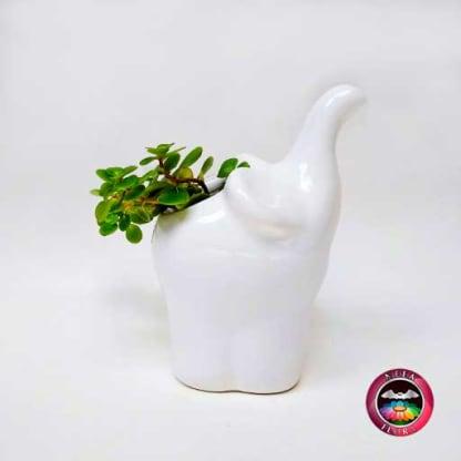Suculenta matera cerámica animales elefante trompa