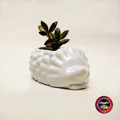 Suculenta matera cerámica animales cuerpo espín diagonal Neea Flora