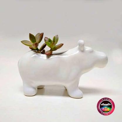 Suculenta en matera cerámica animales hipopótamo lateral Neea Flora