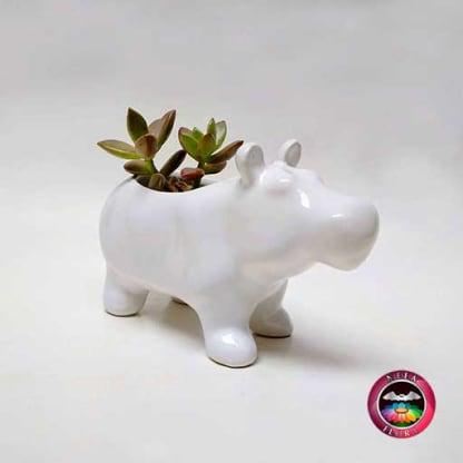 Suculenta en matera cerámica animales hipopótamo diagonal Neea Flora