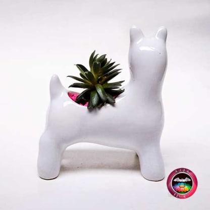 Suculenta maceta cerámica animales perro Snowzer diagonal Neea Flora