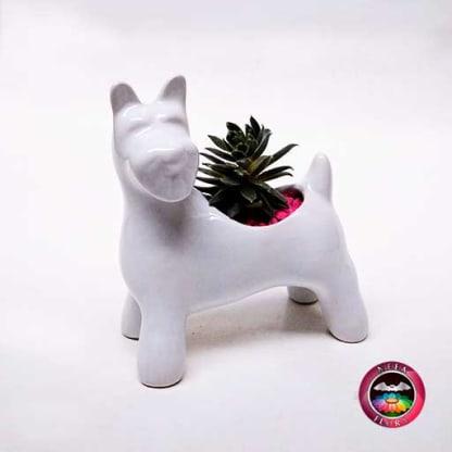 Suculenta matera cerámica animales perro Snowzer diagonal Neea Flora