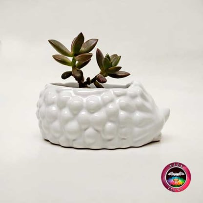 Suculenta matera cerámica animales cuerpo espín Neea Flora
