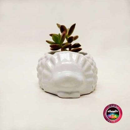 Suculenta maceta cerámica cuerpo espín frontal Neea Flora