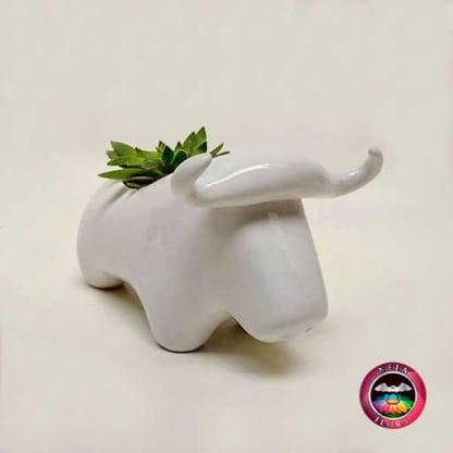Suculenta matera cerámica animales toro diagonal Neea Flora