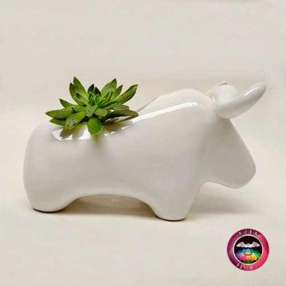 Suculenta maceta cerámica animales toro diagonal Neea Flora