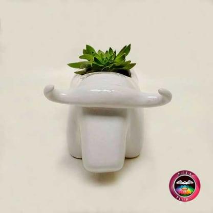Suculenta maceta cerámica animales toro superior Neea Flora
