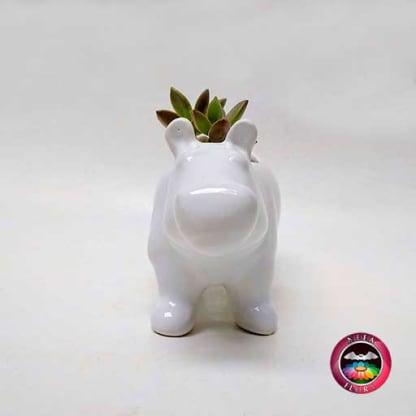 Suculenta en maceta cerámica animales hipopótamo frontal Neea Flora