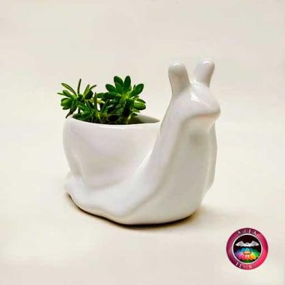 Suculenta matera cerámica animales caracol diagonal Neea Flora