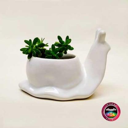Suculenta maceta cerámica animales caracol Neea Flora