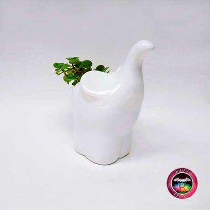 Suculenta matera cerámica animales elefante trompa diagonal Neea Flora