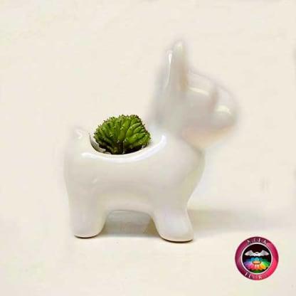 Suculenta maceta cerámica animales perro lateral Neea Flora