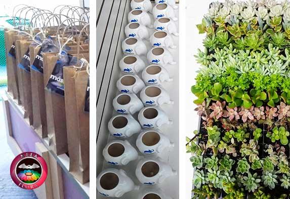 plantas en materas para regalos, souvenirs, recordatorios, promocionales ecológicos Bogotá y otras ciudades: plantas, materas, packaging, personalización.