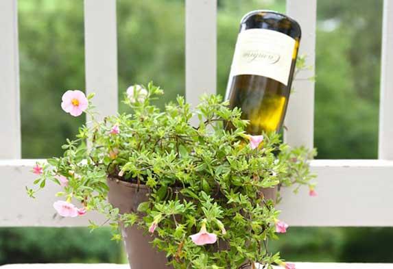 ¿Cómo regar tus plantas si te vas de viaje? Regar plantas botella boca abajo. Neea Flora