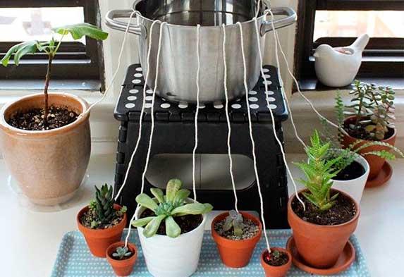 ¿Cómo regar tus plantas si te vas de vacaciones? Regar plantas con Hilo. Neea Flora