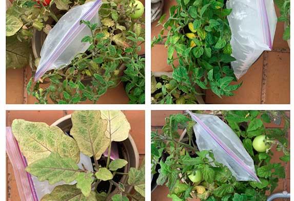 ¿Cómo regar tus plantas si te vas de viaje? Sistema de riego por goteo casero con bolsa. Neea Flora