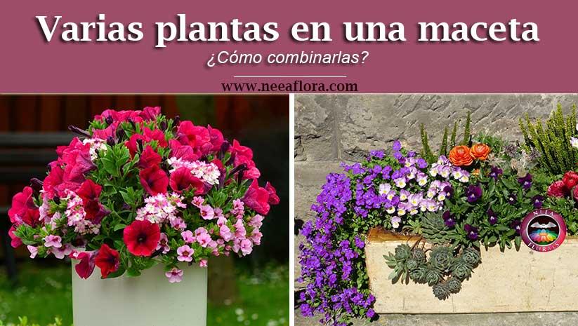 ¿Cómo combinar varias plantas en una maceta? - Neea Flora
