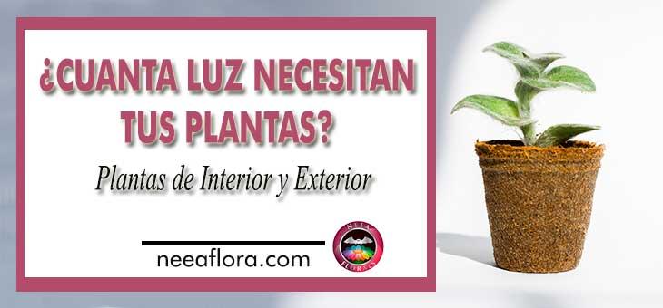 Cuanta luz necesitan tus plantas plantas de interior y exterior luz y sombra Neea Flora