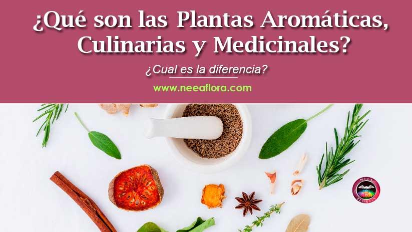 ¿Qué son las plantas aromáticas, culinarias y medicinales? ¿Cual es la diferencia?