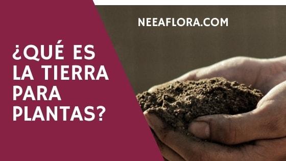 Qué es la tierra para plantas Blog Neea Flora