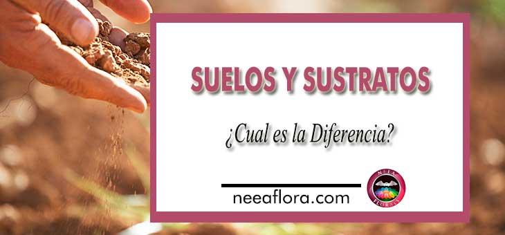 ¿Cual es la diferencia entre suelo y sustrato? Blog Neea Flora