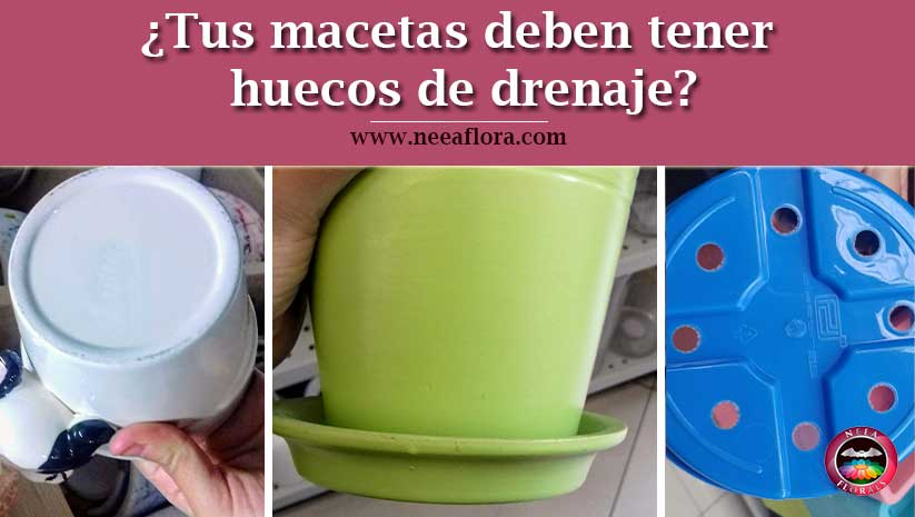 ¿Tus macetas deben tener huecos de drenaje? - Blog Neea Flora