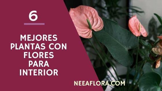 Las 6 mejores plantas de interior con flores para tu casa - Blog Neea Flora