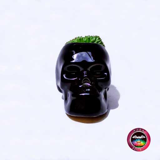 Cactus maceta cerámica cráneo Neea Flora