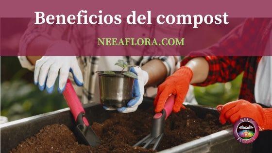 Cuáles son los beneficios del compost y compostaje - Blog Neea Flora