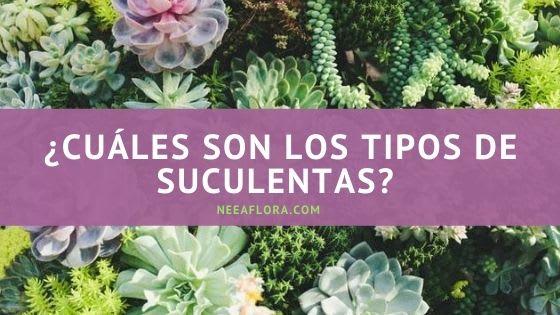 ¿Cuáles son los tipos de suculentas? Blog Neea Flora
