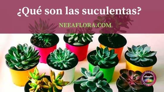 Qué son las plantas suculentas blog Neea Flora