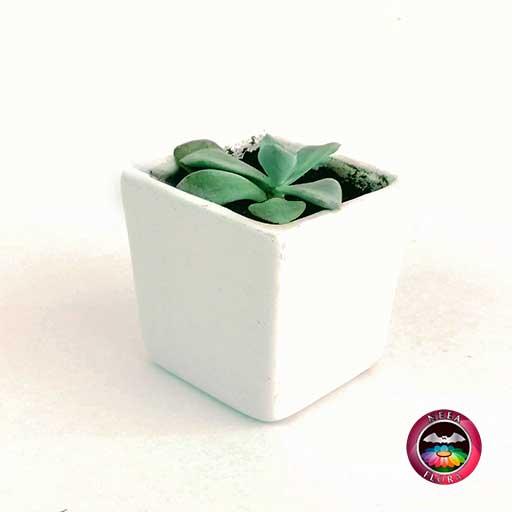 Suculenta recordatorio matera cerámica resinada cubo blanco Neea Flora
