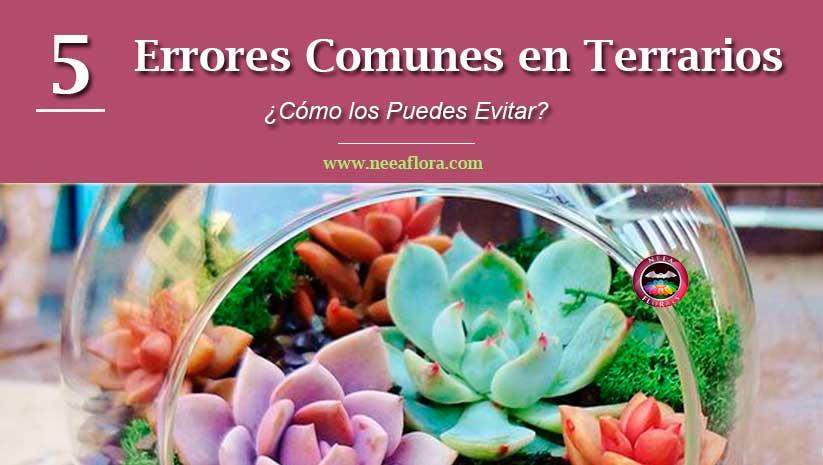 5 errores comunes en terrarios cómo evitarlos Vivero Bogotá Neea Flora