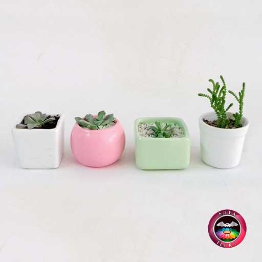 Recordatorios suculentas materas cerámica resinadas pequeñas cubo bola caja vasito Neea Flora