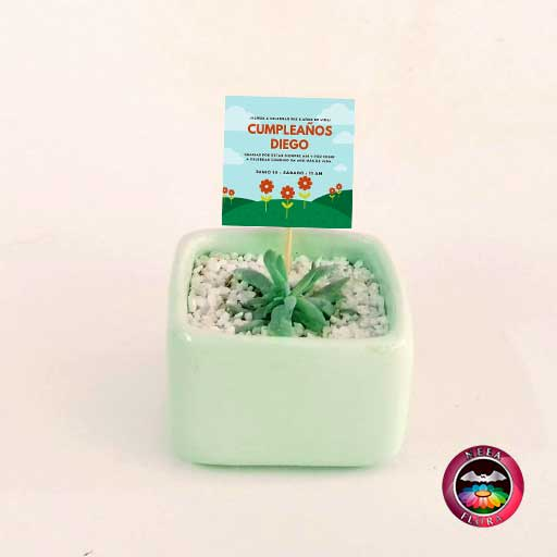 Suculentas recordatorios matera cerámica caja 7x4cm verde crema con tarjeta Neea Flora