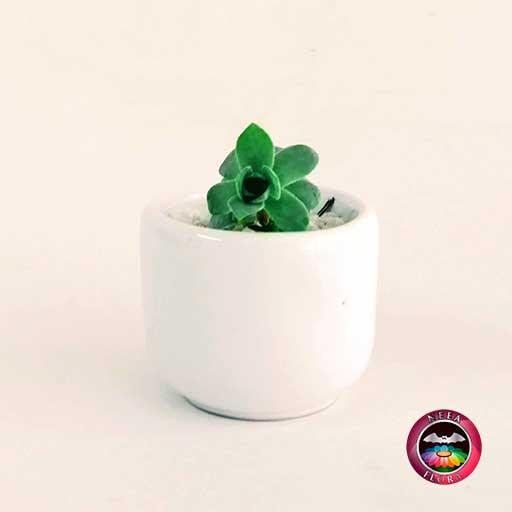 Suculenta recordatorio matera cerámica ponchera 5x4cm blanca Neea Flora