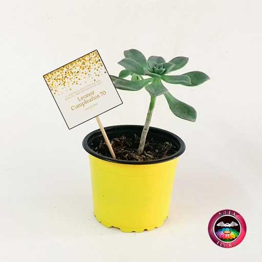 Suculentas recordatorios matera plástica 9cm colores amarilla con tarjeta Neea Flora