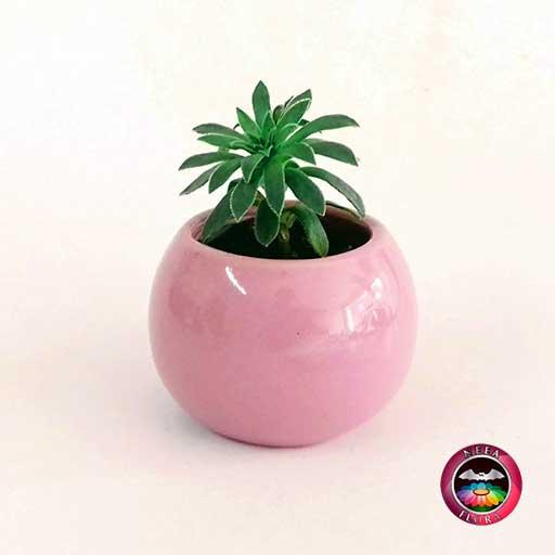 Suculenta recordatorio matera cerámica esmaltada bola 6x5cm rosa Neea Flora