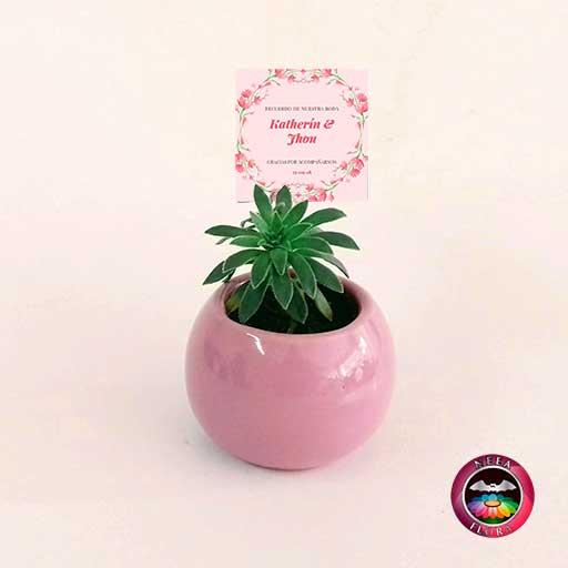 Suculentas recordatorios matera cerámica esmaltada bolita 6x5cm rosa con tarjeta Neea Flora