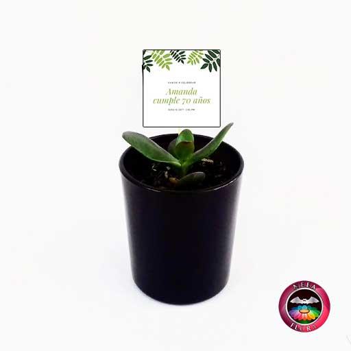 Suculentas recordatorios matera vidrio cilindro mini 7x8cm negro con tarjeta Neea Flora