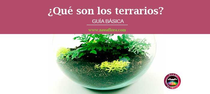 ¿Qué es un terrario? Guía básica de Neea Florals