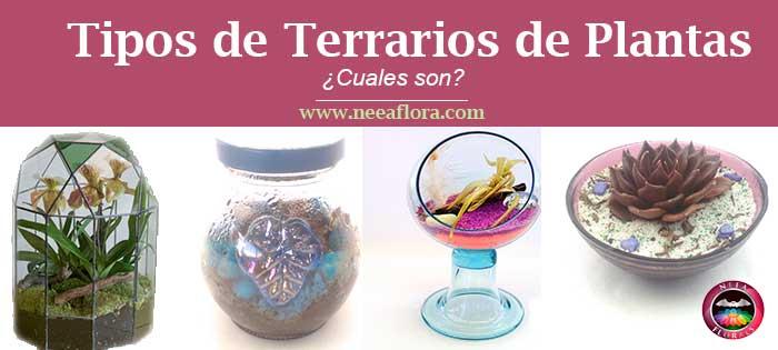 tipos de terrarios de plantas cuales son Neea Flora