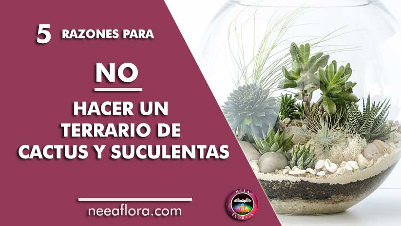 5 razones no hacer terrarrio de cactus y suculentas Neea Flora