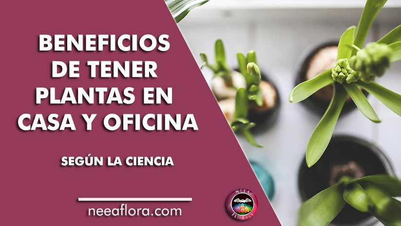 Los beneficios de tener plantas en casa o en tu lugar de trabajo, según la ciencia Neea Flora